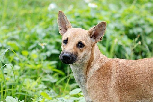 Dog, Taiwan, Grassland