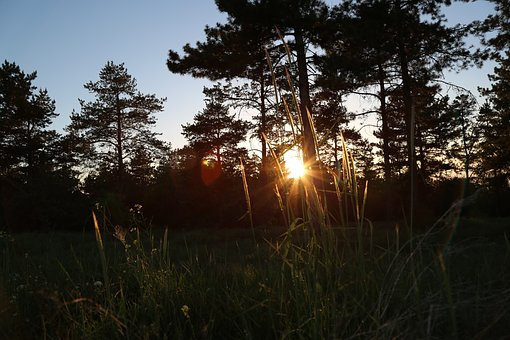 Sunset, Forest, Nature, In The Evening, Trees, Tree