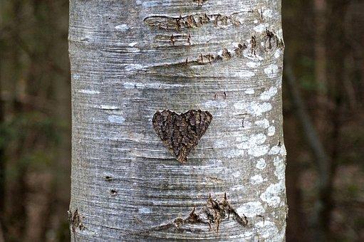 Heart, Tree Bark, Love, Tree, Bark, Engraved, Carved