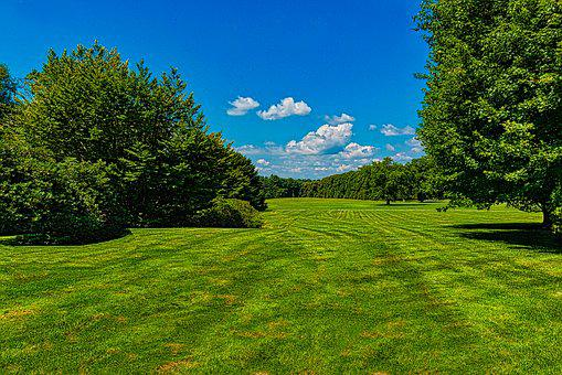 Open Field, Trees, Blue Sky, Grass