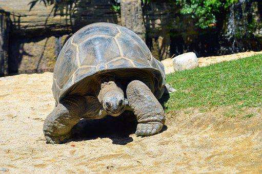 Turtle, Tortoise, Nature, Animal, Shell, Reptile