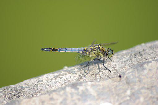 Dragonfly, Insect, Wings, Eyes
