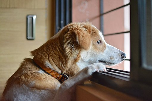 Sad, Dog, Animal, Pet, Brown, Puppy, Young, Lonely