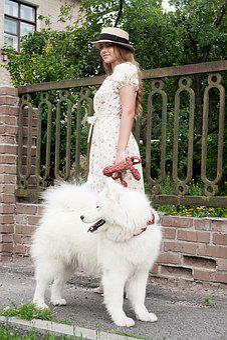Girl, Dog, Portrait, Animals, Love, Woman, Nature