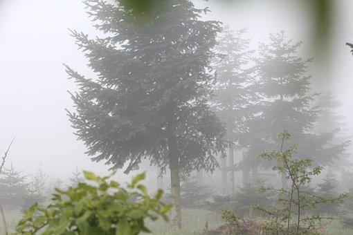 Morgentau, Fog, Morning Mist, Nature, Dew, Autumn