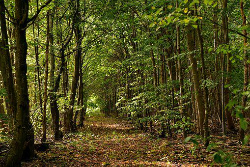 Forest, Away, Forest Path, Trees, Nature, Recovery