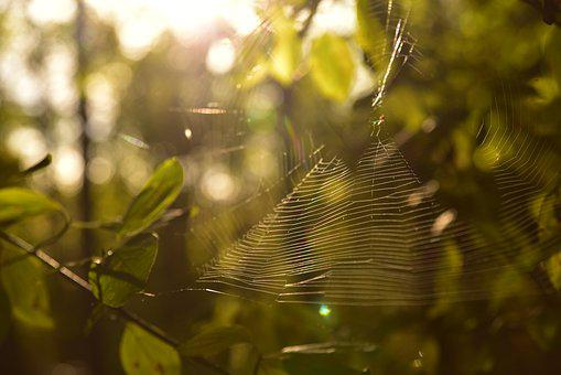 Cobweb, Forest, Backlighting, Leaves, Mood, Light