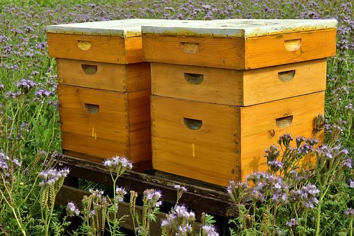 Beehive, Bees, Bee Keeping, Beekeeping, Honey