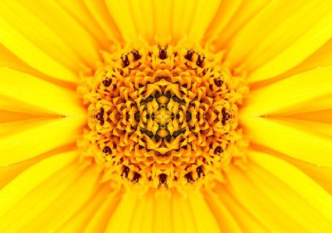 Magarite, Flower, Mirroring, Nature, Spring, Blossom