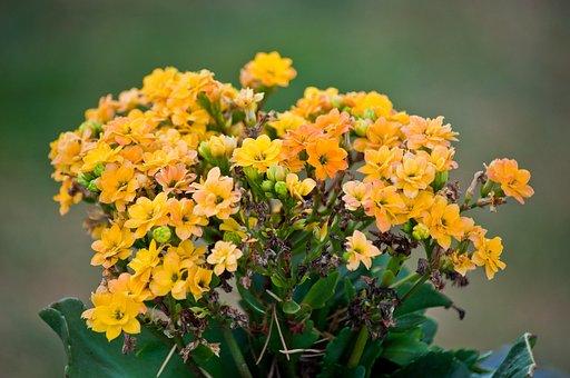 Bouquet Of Flowers, Flowers, Bouquet, Decoration