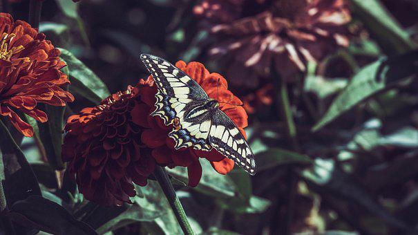 Butterfly, Flowers, Insect, Wing, Garden, Summer