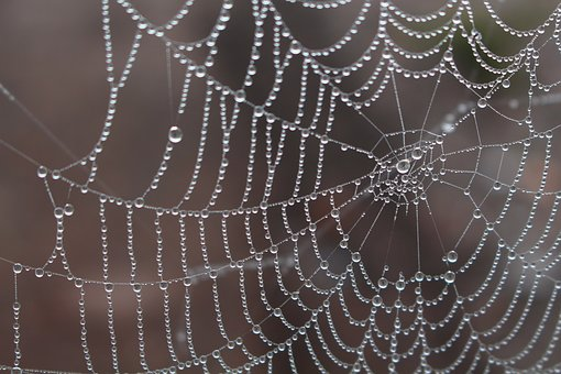 Spider, Morgentau, Cobweb, Dew, Dewdrop, Nature, Web
