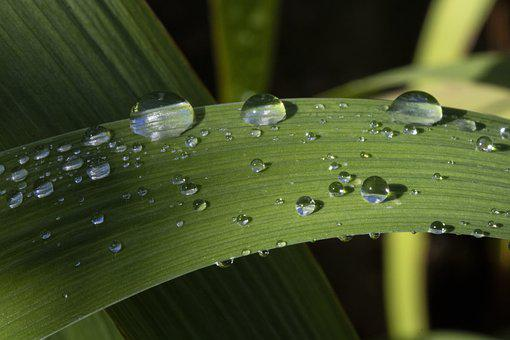 Trickle, Dew, Nature, Plants, Raindrops, Water, Wet