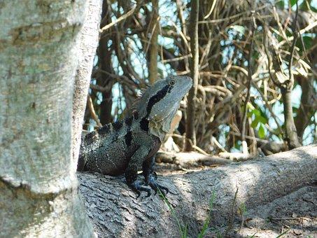 Dragon, Water Dragon, Lizard, Reptile, Perched, Nature