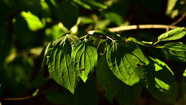 Leaves, Green, Nature, Plant, Environment, Forest, Tree
