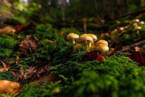 Nature, Mushroom, Autumn, Forest, Moss, Forest Floor