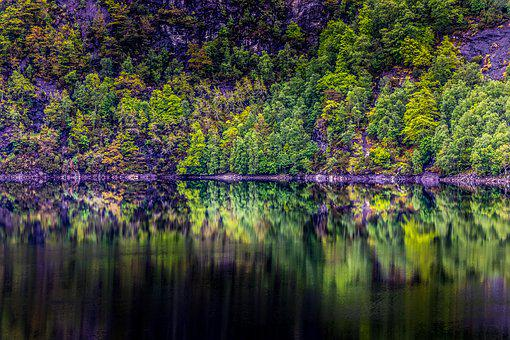 Norway, Forest, Lake, Reflection, Landscape, Tree