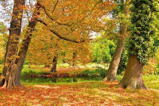 Trees, Park, Nature, Leaves, Autumn Beginning, Autumn
