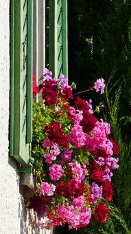 House, Window, Shutters, Geranium, Flowers, Sun, Light