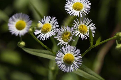 Little Flower, Wildflower, Plants, Nature, Flowers