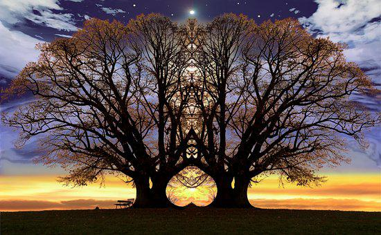 Trees, Mirroring, Nature, Mood, Rest, Sunset