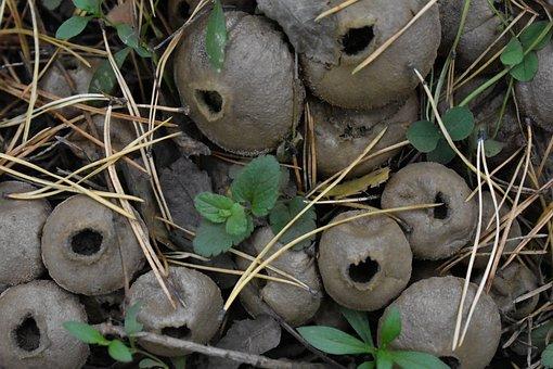Mushrooms, Rain Cover, Forest, Old, Mushroom, Nature