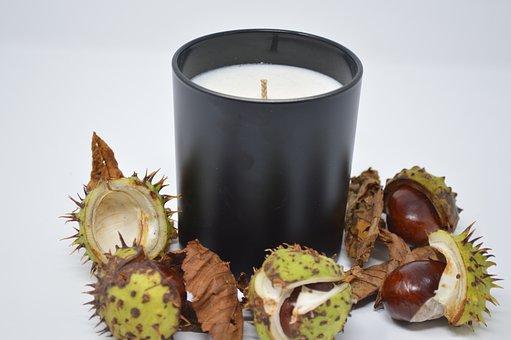 Conker, Conkers, Horse Chestnut, Chestnut, Nut, Nature