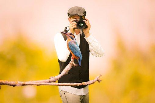 Hummingbird, Photographer, Bird, Watching, Nature