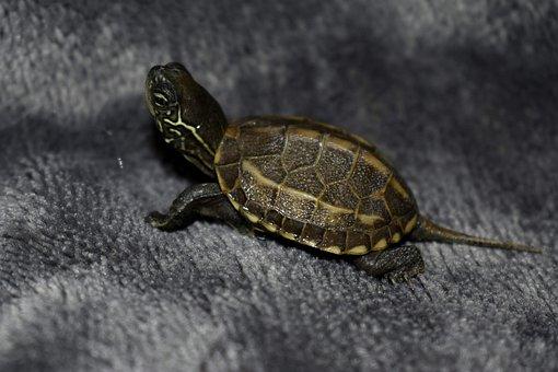 Turtle, Homemade Animal, Aquatic, Animal, Páncèl