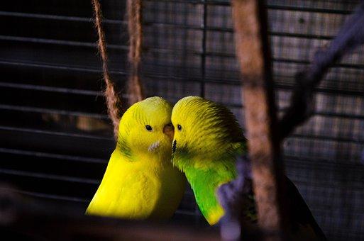 Parrot, Birds, Exotic
