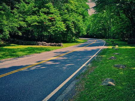 Forest Road, Lonely, Curve, Road, Green, Forest
