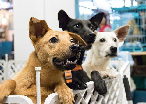 Dog, Adoption, Desire, Taiwan