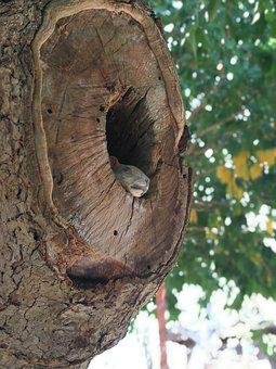 A Hollow Tree, Tree, Squirrel, Nest, Pa, Cavity, Squral