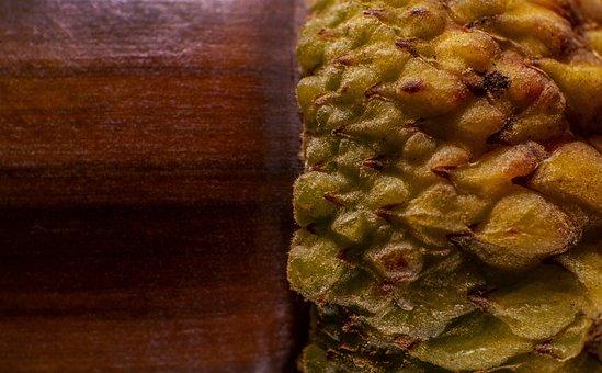 Acorn, Nature, Forest Fruit, Tree Fruit, Macro