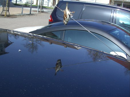 Impaled, Accidental Death, Sparrow, Car Antenna