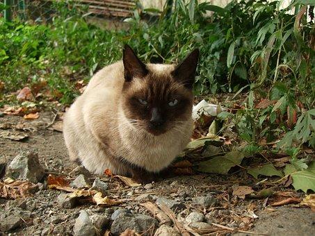 Cat, Animal, One Animal, Creature, Cat Eyes, Japan, Bad