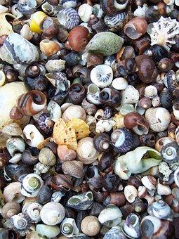 Beach, Beach Combing, Shells, Combing, Coast