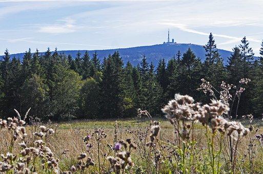 Resin, Brocken View, Torfhaus, Knoll, Coniferous Forest