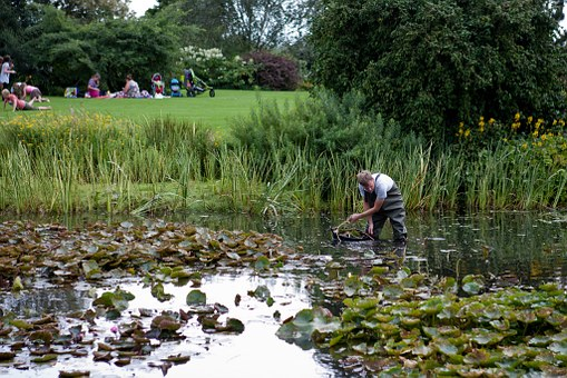 Pond Clearing, Man, Waders, Lawn, Hyde Hall, Essex, Uk