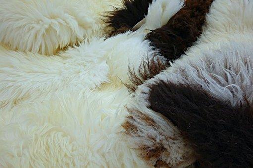 Fleece, Hide, Wool, Sheep, Fluffy, Animal Hide