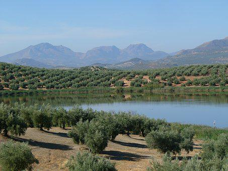Field, Olive Trees, Lake, Mountains, Nature, Aove