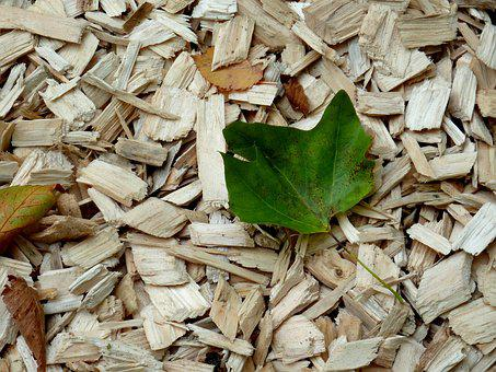 Wood Chips, Leaf, Autumn, Leaves, Wood Chopping