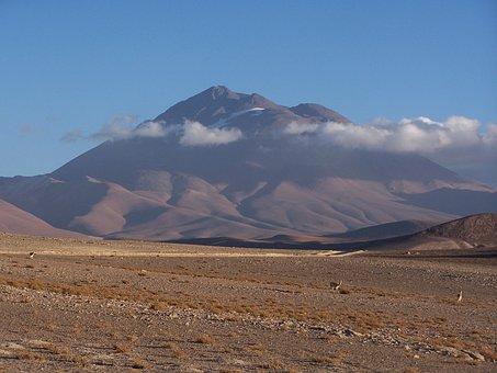 Llullaillaco, Vicuna, Vicunas, Mountain, Volcano, Andes