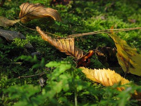 Leaf, Moss, Mushrooms, Autumn, Litter, Fleece, Forest