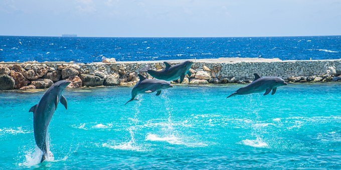 Dolphins, Jumping, Stunt, Sea, Marine, Nature, Water