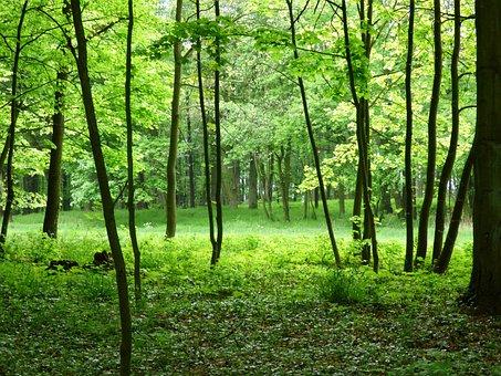 Forest, View, Green, Nature, Poland, Roslinność, Tree