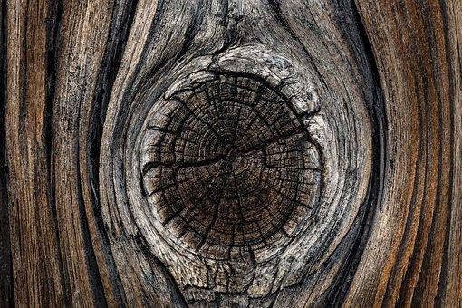 Board, Wood, Branch, Old, Grain, Panels, Boards Bridle