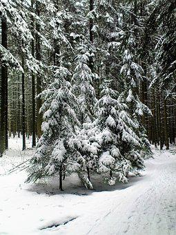 Winter, Fir Forest, Wintry, Snow, Trees, Snow Landscape
