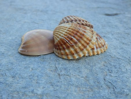Seashells, Sea Life, Marine, Summer, Nature, Design