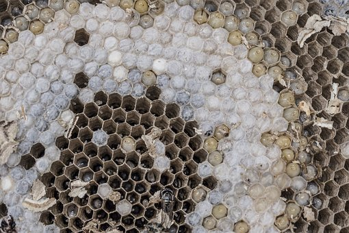 The Hive, Wasps, Combs, Larvae, Development, Hexagon